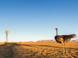 Springbok Inn, springbok accomodation, Springbok hotel, namaquland flowers,